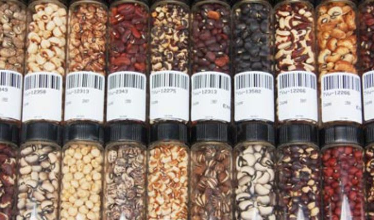 cowpea_seed_collection